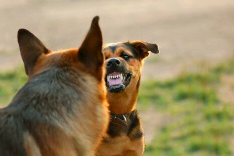World's Most Dangerous Dog Breeds