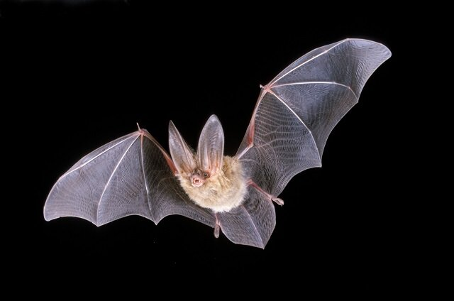 Bat, creepy animals