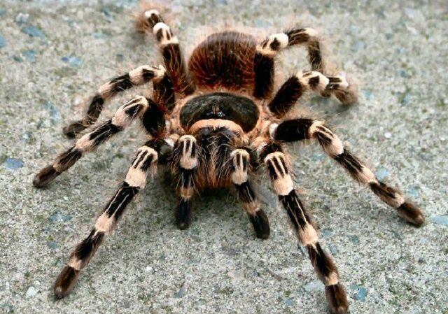 Spider, creepy animals