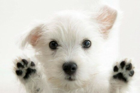 Interesting And Unusual Facts About Dogs