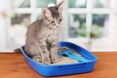 The Best Pet Litter Boxes